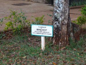 Mike-Boit-tree